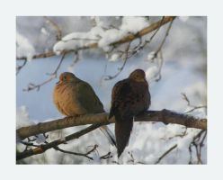 Two Doves by barcon53