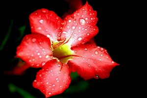 Macro 8 - Red Flower by TonsArtClick