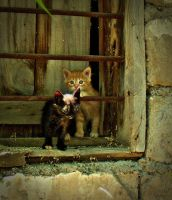 old window and baby cats by lisans