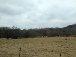 Tennessee (14/15) by ScenePika