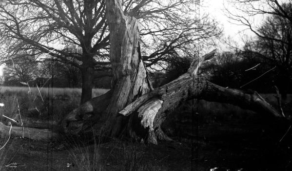 Richmond Park by Trapstreetpinhole
