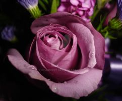 Waterdrop Rose by charmedy