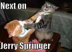 Jerry springer cats by MBbunny