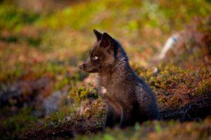 Baby Foxes - Moments Ago 7 by Witch-Dr-Tim