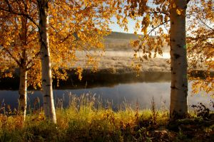 Sunrise in Lapland II by ower