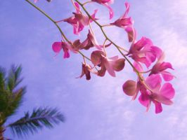 Orchid by x----eLLiE----x