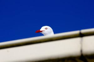 Seagull 2 by devoidofanchovies