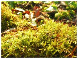 moss by fraserw2