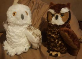 Great horned and snowy white by Porygon2z