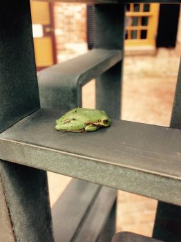 Frog Nap by TheHeartwoodStudio