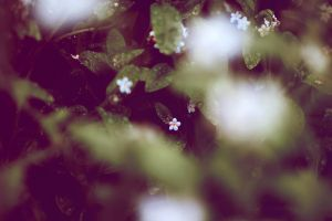 forget me not_2 by LucyJOrchard
