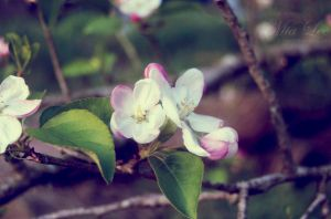 Blossom by MiaLeePhotography
