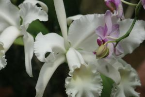 orchids in greenhouse by ingeline-art