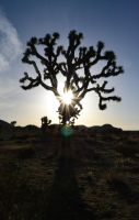 Joshua Tree by Artmyth11