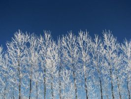 Winter I by caitlinwithasea