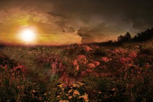 Campo de Flores /  Flowers Field by TheAxelLove