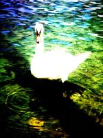 Swan by intake-eyes