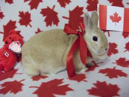 Tinsel - Canada Day 1 by Wolfie-Forever