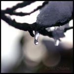 Frozen in Time by Caelitha