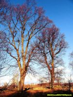 TREES IN SUN... by magicandbrother