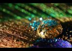 Rainbow by Limaria