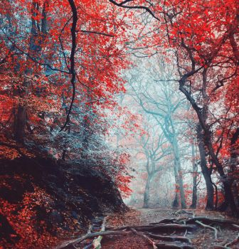 Red forest IV - stock by Aeternum-designs