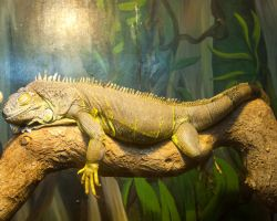 Lounge Lizard by crispynoodle