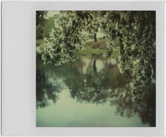 Blossoms of May by equivoque