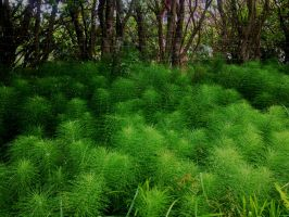 Horsetail by trinafool