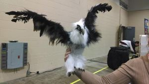 Bearded Vulture (For Sale) by Butterfly-Kitsune
