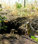 squirrel hole by mangopuding