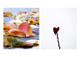 47.52 - leaves are falling like... falling in love by awfultosee