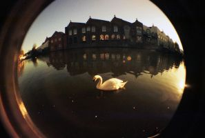 FishEye_1 by XS-Tarsier
