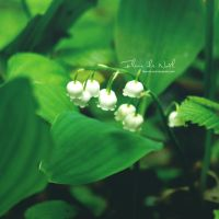 Lily of the valley by Fleur-de-Noel