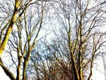 Trees by SidneyLouiseMunns01