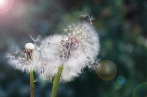 wind of change... by AleeLuvYou