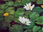 Waterlilies by tmcknight90