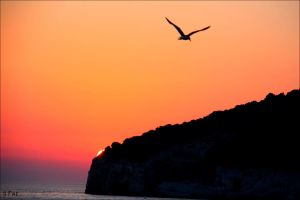 Seagull in the sunset by Patguli