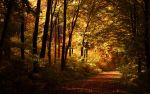 Lonely autumn walk Wallpaper by JoInnovate