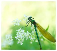 Dragonfly by Art-ography