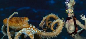 Octopus 2 by wsaef