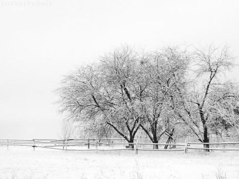 Winter by rosaarvensis