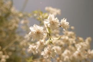 Antique Flowers by Justateen10