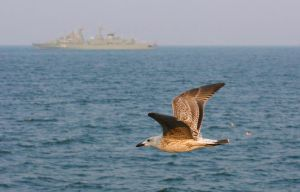 Seagull in flight (11) by danyel-i