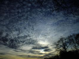 Sky and trees - 55 A by HermitCrabStock