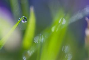 Early spring dewdrops by AngiWallace