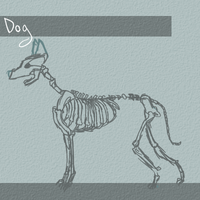 :Day 14: Dog Skeletal system by Mooui