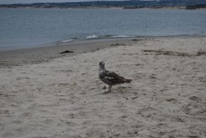 Bird at the Beach Stock 2 by IllusionsGlade