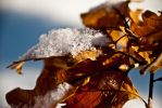 Leaves under snow by Lady-Faye-Valentine