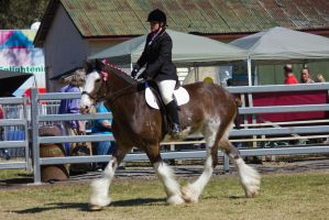STOCK Canungra Show 2013-238 by fillyrox